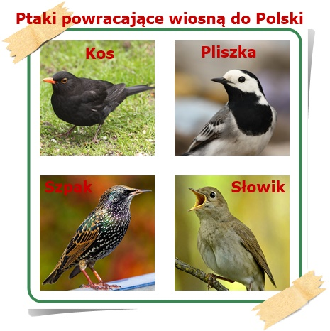 Z ciepłych krajów ptaki do Polski wracają i o pomnikach przyrody wesoło  ćwierkają - Szkolne Blogi